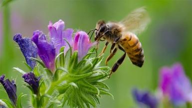 HoneybeesCCD_m_0503