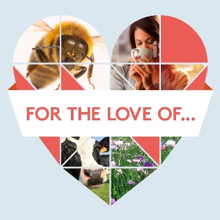 for-the-love-of...heart-image